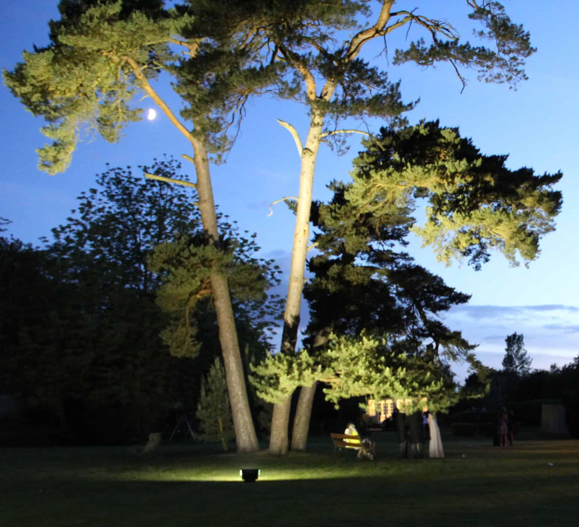 24 Cool Flood Lights On Trees