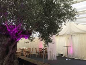 Illuminated Olive tree for 18th party